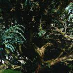 peintre cherche un atelier dans la nature